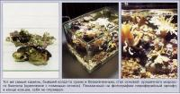 Безжизненный камень стал основой морского биотопа