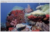 Биотоп коралловый риф