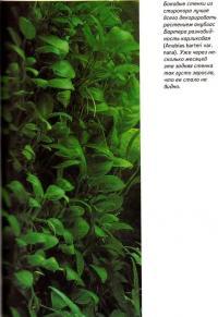 Боковые стенки из стиропора лучше всего декорировать растением анубиас Бартера