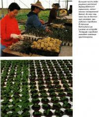 Большая часть аквариумных растений выращивается в горшочках