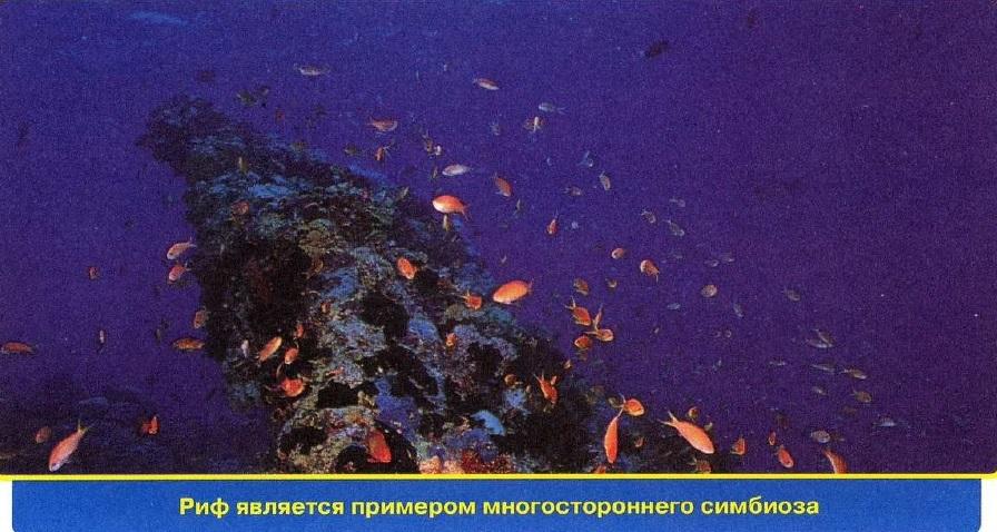 Что такое риф?