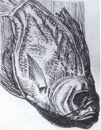 Д. И. Митрохин. Рыба. 1972. Рисунок
