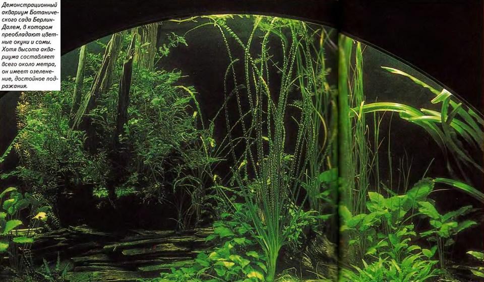 Демонстрационный аквариум Ботанического сада Берлин-Далем