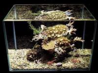 Дешевые и удобные в чистке стенок: аквариумы, склеенные при помощи силикона