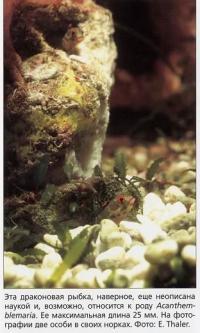 Драконовая рыбка, неписанная наукой