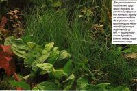 Две расположенные параллельно друг другу дорожки из растений