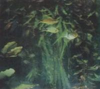 Фрагемерт декоративного аквариума с разными рыбами