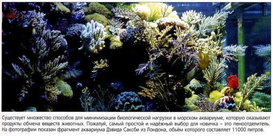 Фрагмент аквариума Дэвида Саксби