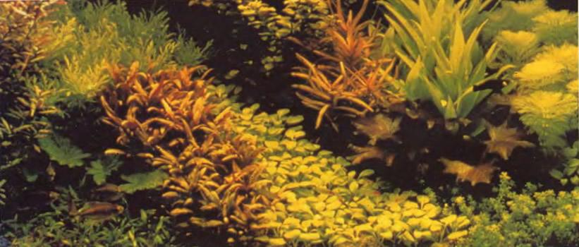 Фрагмент голландского аквариума