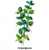 Гигрофила