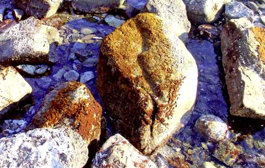 Глойопелтис вильчатый в среде обитания
