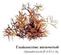 Глойопелтис вильчатый