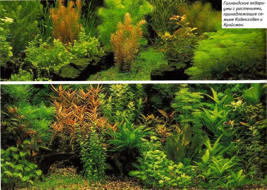 Голландские аквариумы с растениями
