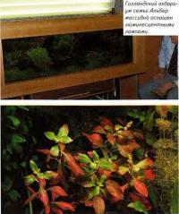 Голландский аквариум массивно оснащен люминесцентными лампами