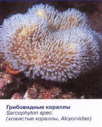Грибовидные кораллы
