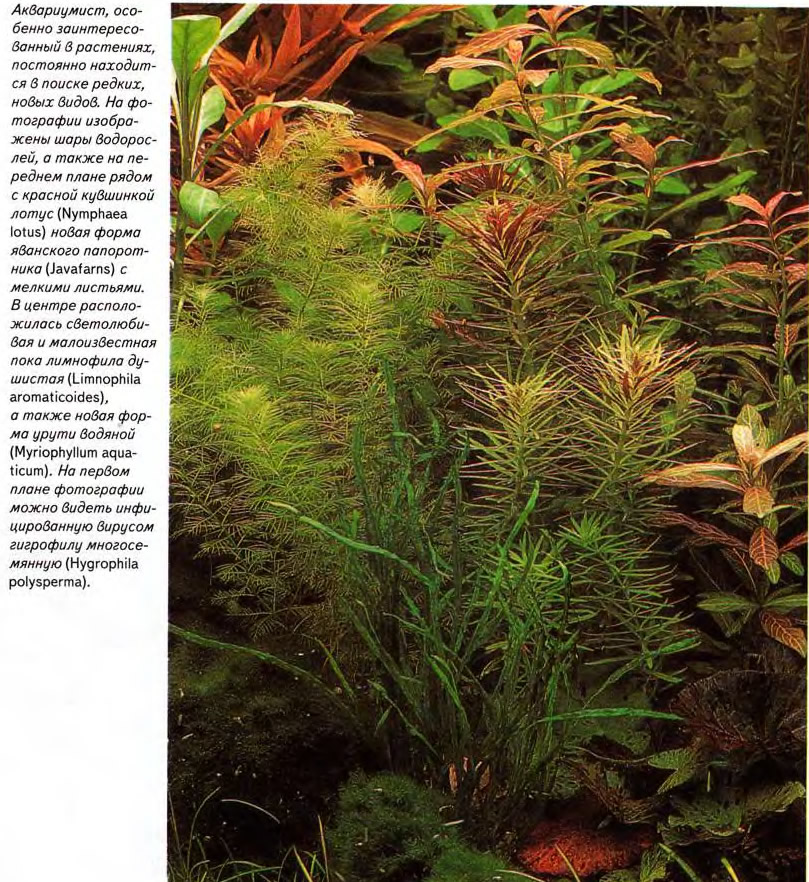 Группа редких видов растений
