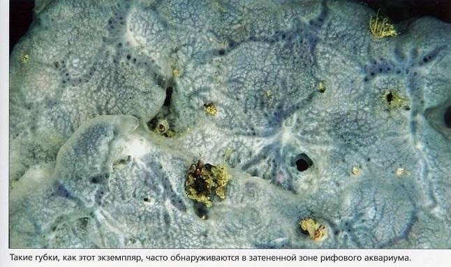Губки в затенённой зоне наноаквариума
