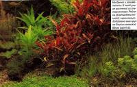 К этой улице растений из альтернантеры Рейнека добавлена группа Бликсы японской