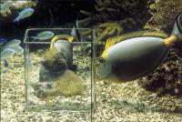 Как соотносятся размеры рыб с размером наноаквариума