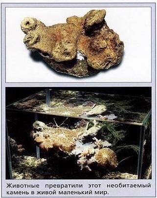 Как животные могут преобразить необитаемый камень