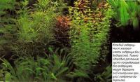 Каждый желает иметь аквариум без водорослей