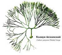 Кодиум йезоенский