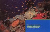 Кораллы - основа рифов