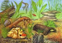 Коряги и камни на дне аквариума