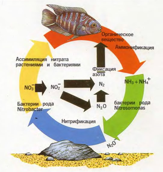 Круговорот органических веществ в аквариуме