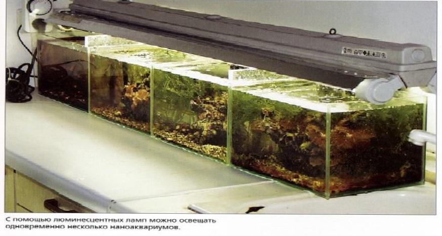 Люминесцентная лампа освещает сразу четыре аквариума