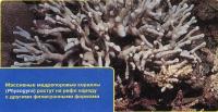 Мадрепоровые кораллы