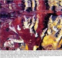 Мажущиеся водорости - проблема аквариума