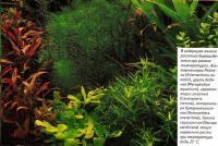 Многие растения выращиваются при разных температурах