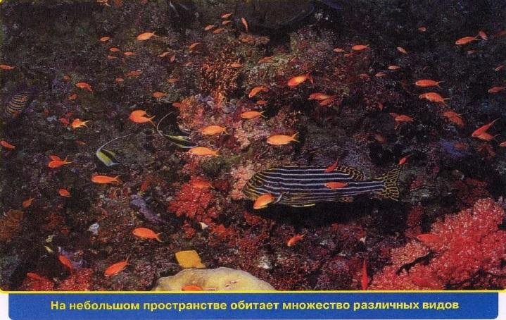 Многочисленная фауна рифа