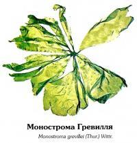 Монострома Гревилля
