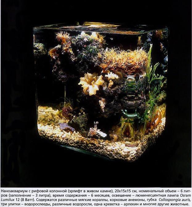 Наноаквариум с рифовой колонной