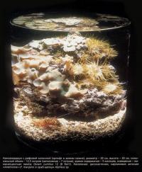 Наноаквариум с рифтовой колонной