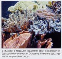 Обитатели банки с твёрдыми кораллами