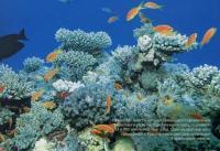 Организмы коралловых рифов производят известь