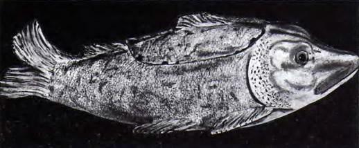Паштетница в форме рыбы. Голич. Около 1750 г.