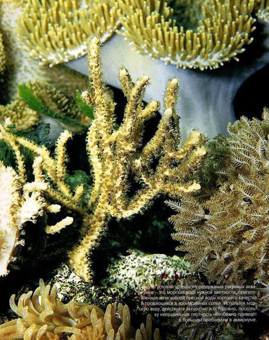 Плотность воды очень важна для рифового аквариума