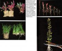 Подготовка приобретенных растений
