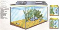 Правильное и неправильное освещение аквариума