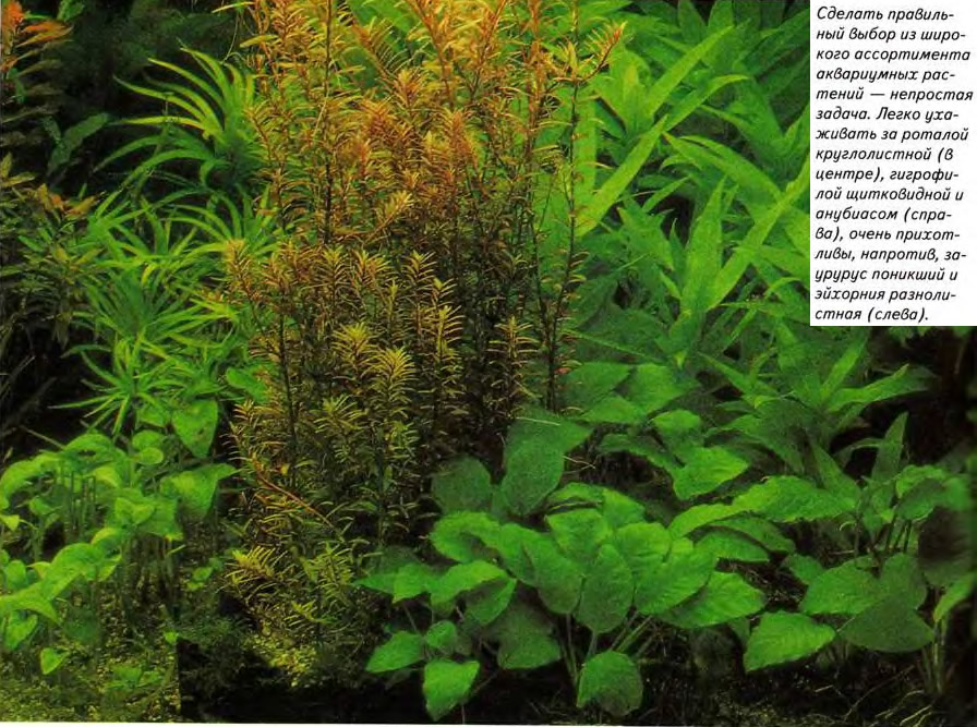 Правильный выбор из широкого ассортимента аквариумных растений