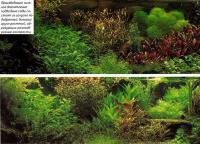 Производящие сильное впечатление подводные сады