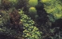 Растения в декоративном аквариуме - лейденская улица