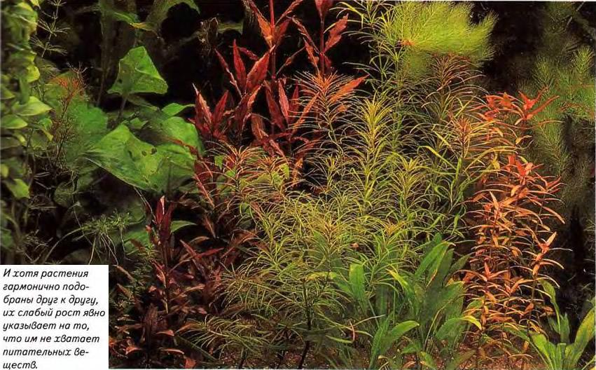 Растениям не хватает питательных веществ