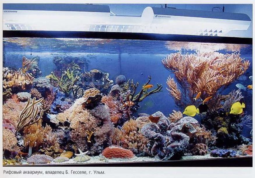 Рифовый аквариум Б.Гесселе