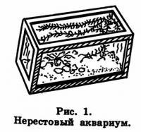 Рис. 1. Нерестовый аквариум