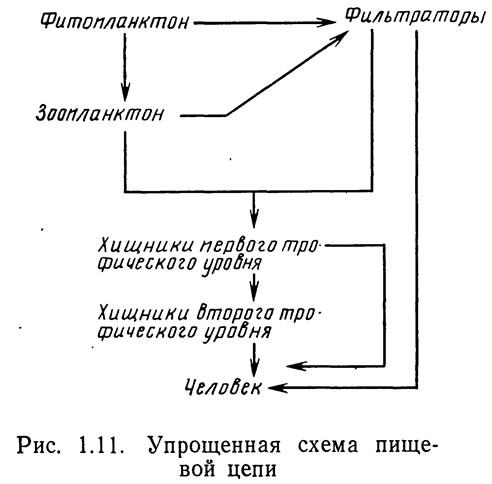 Рис. 1.11. Упрощенная схема пищевой цепи